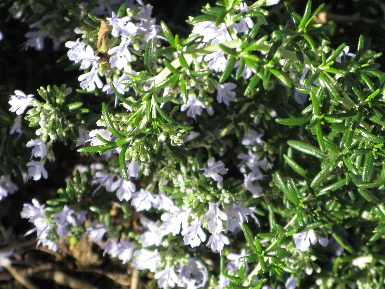 01-janvier-fleurs-2013-4-jpg
