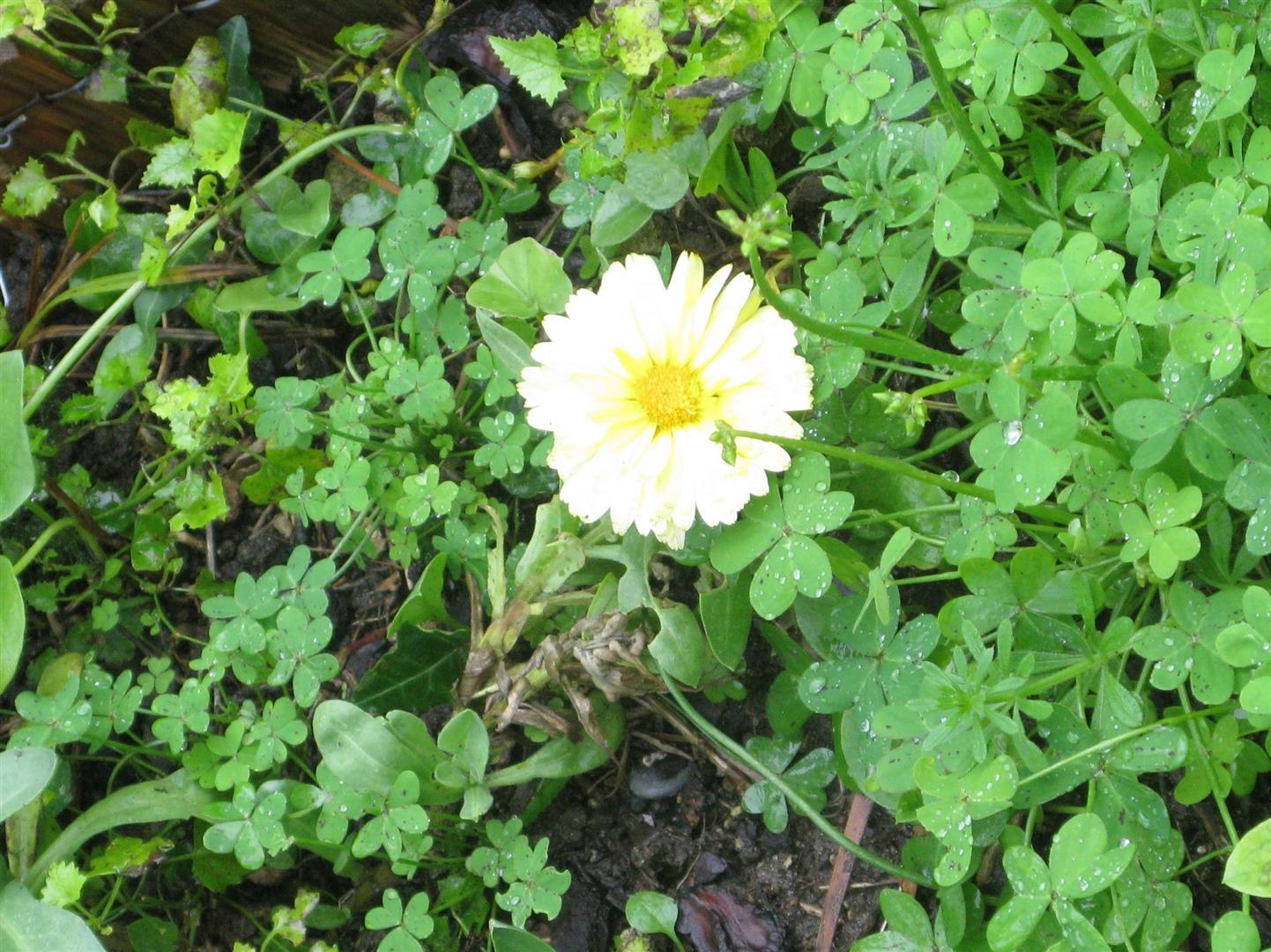 03-mars-fleurs-2013-1-jpg