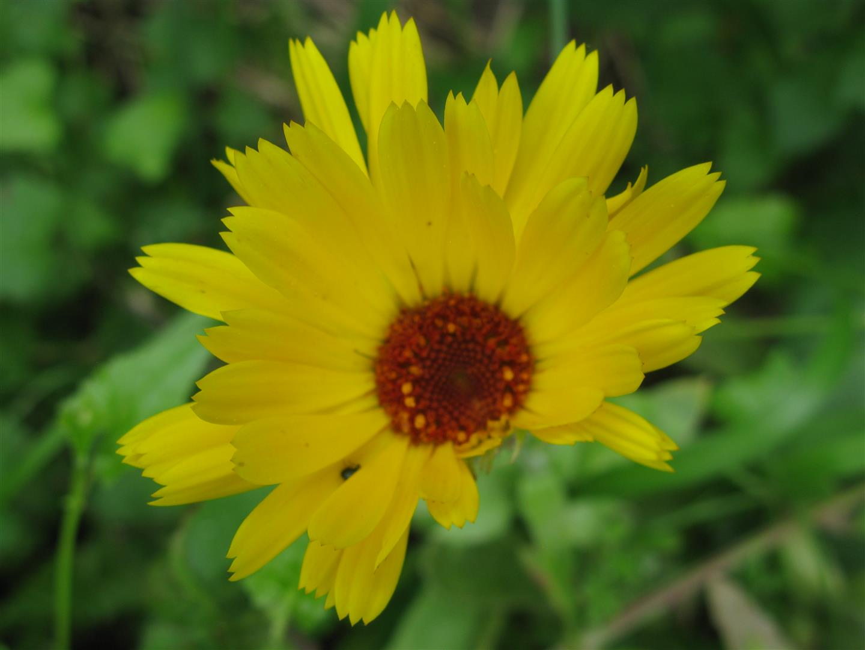 05-mai-fleurs-2013-14-jpg