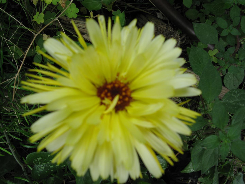 05-mai-fleurs-2013-17-jpg