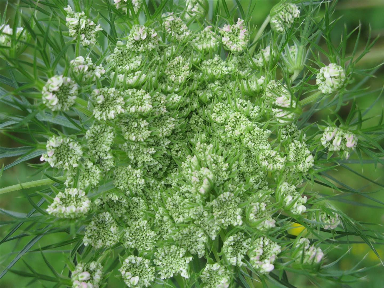 05-mai-fleurs-2013-36-jpg