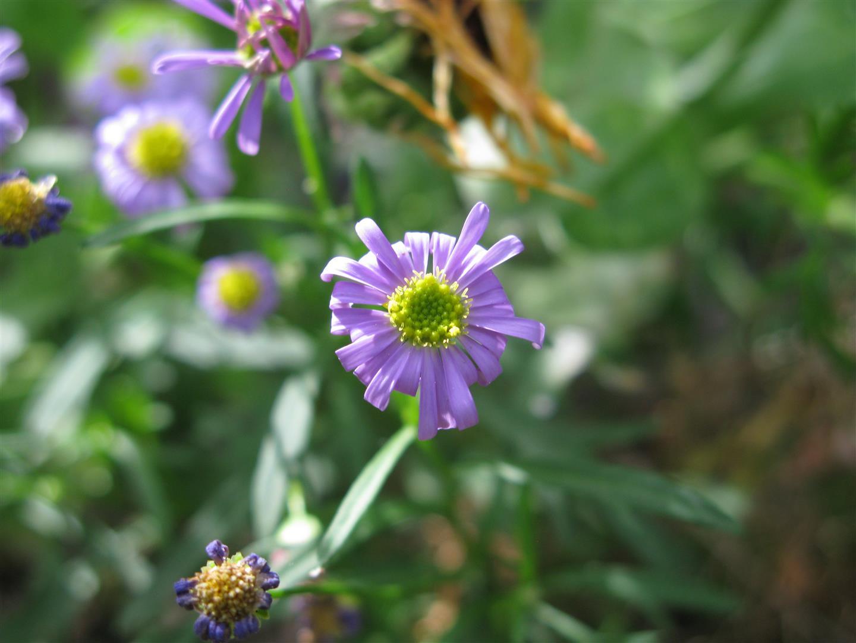 05-mai-fleurs-2013-38-jpg