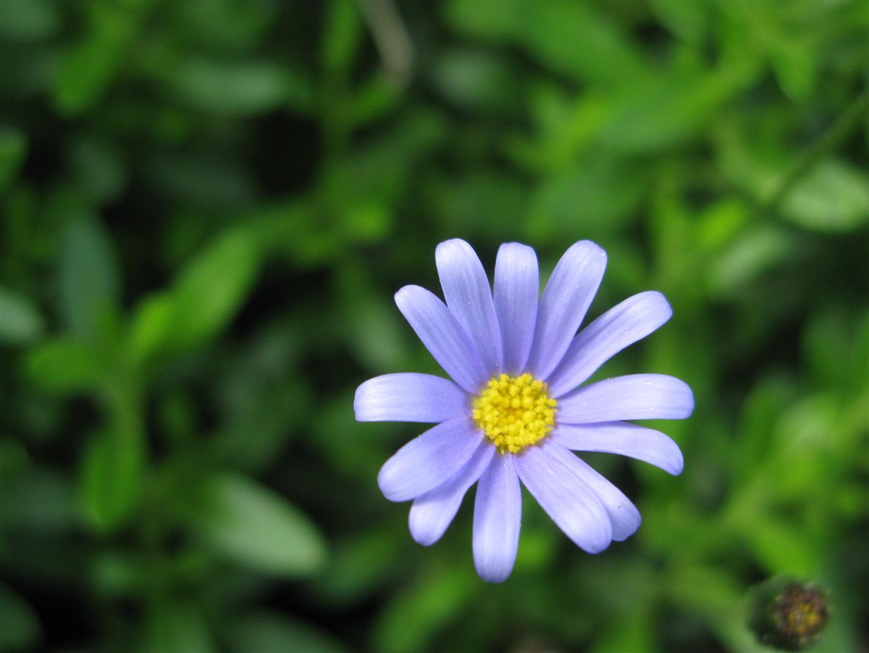 05-mai-fleurs-2013-40-jpg