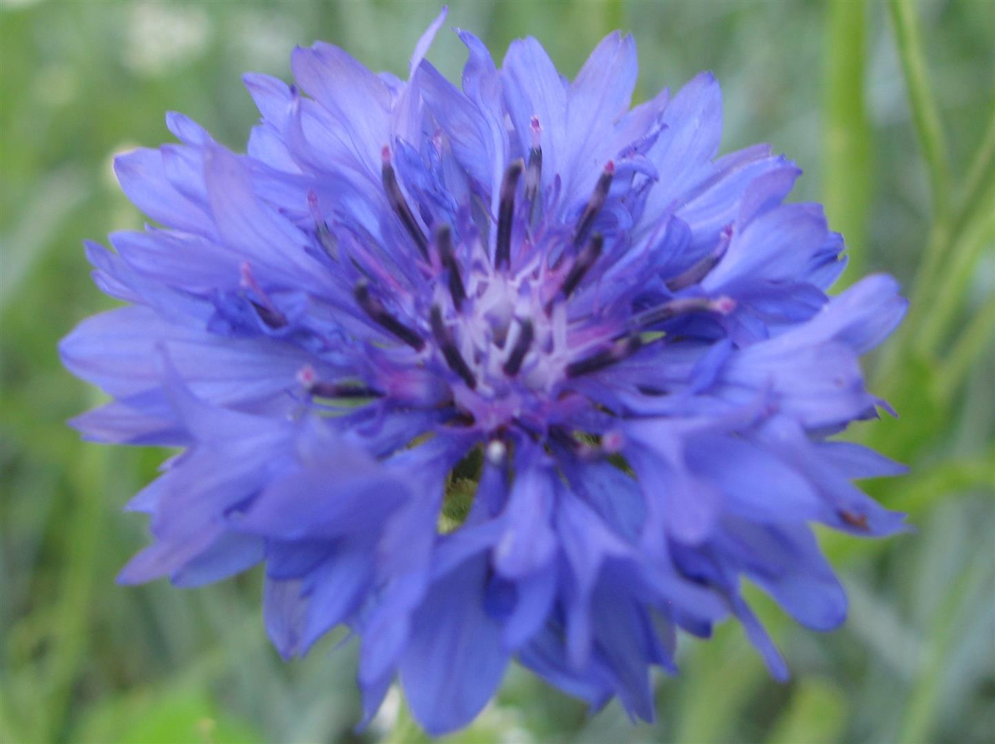 06-juin-fleurs-2012-3-jpg