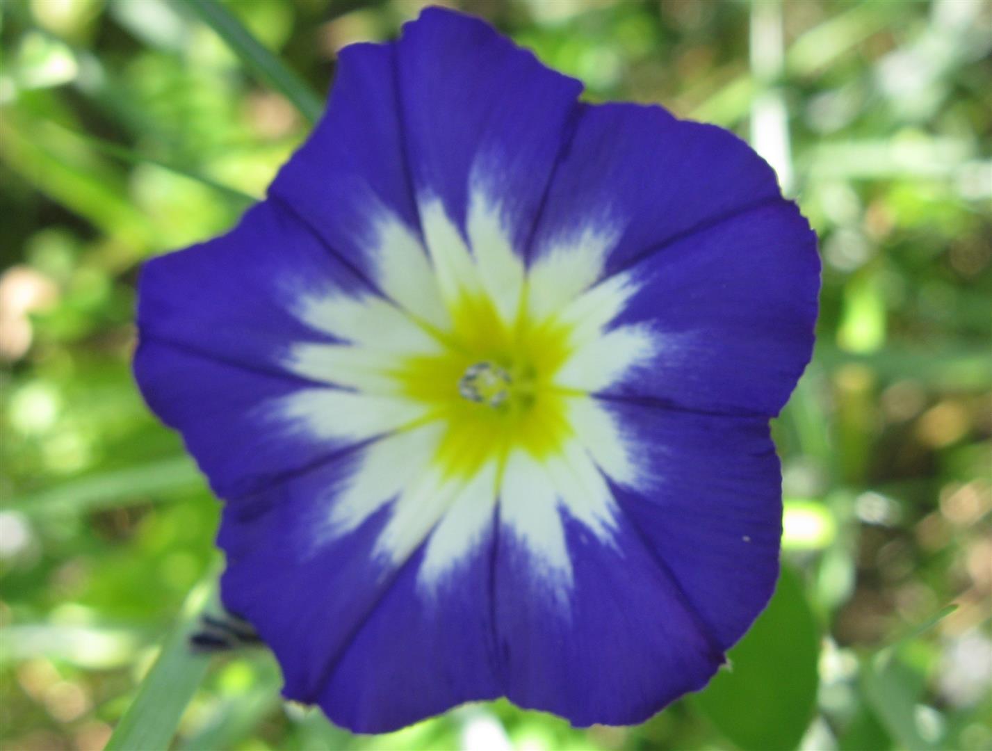 06-juin-fleurs-2012-6-jpg