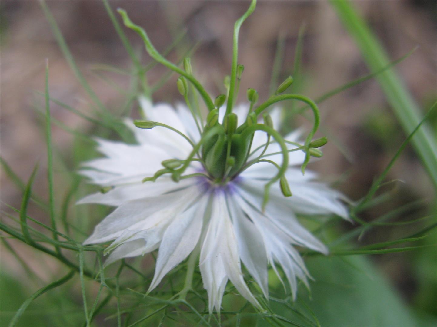 07-juillet-fleurs-2012-11-jpg