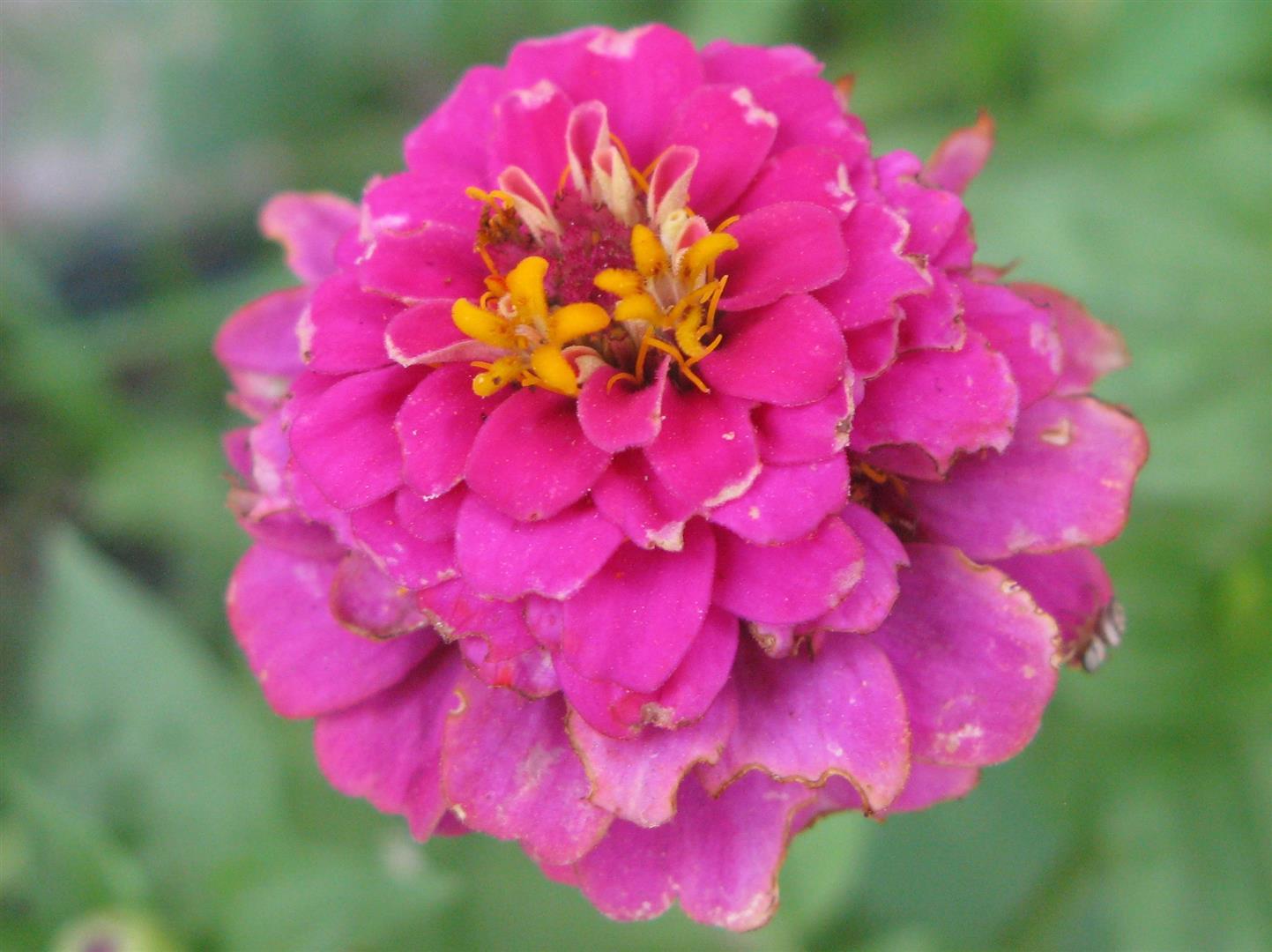 07-juillet-fleurs-2012-13-jpg