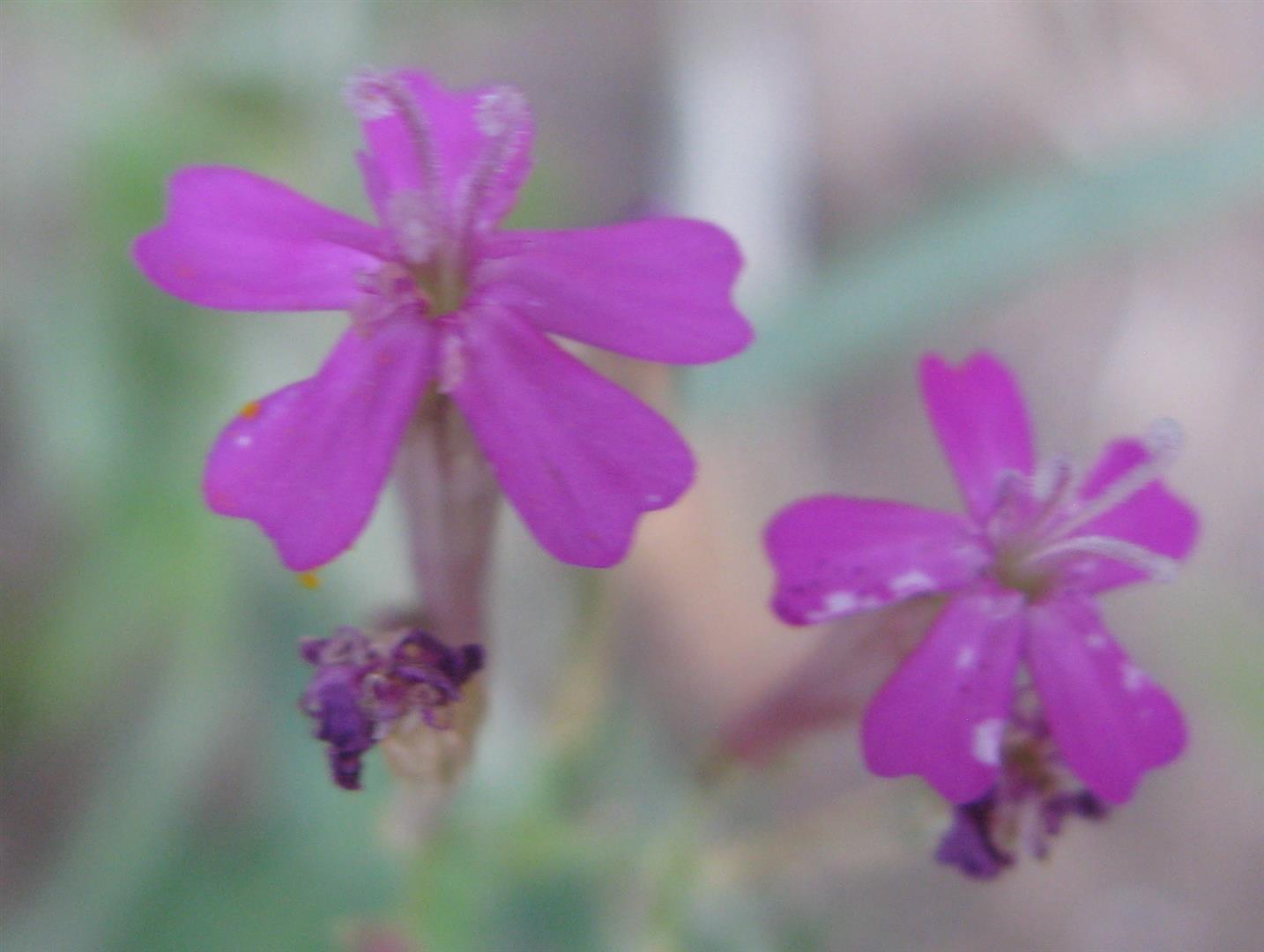 07-juillet-fleurs-2012-16-jpg