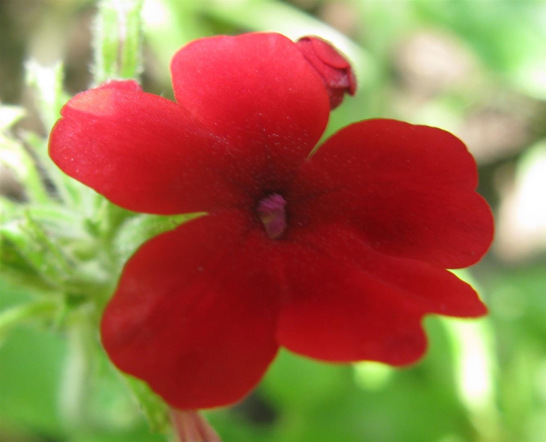 07-juillet-fleurs-2012-17-jpg