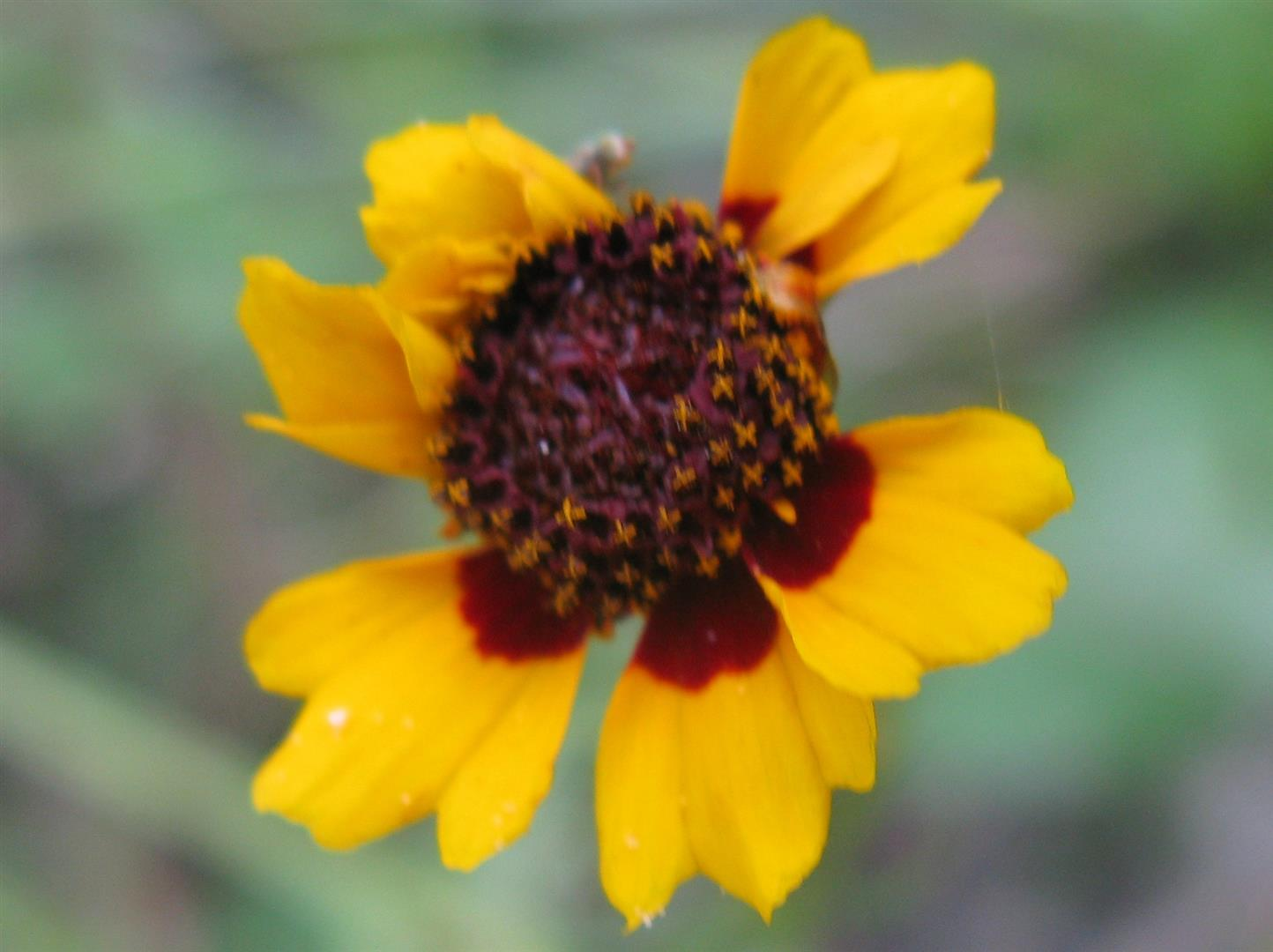 07-juillet-fleurs-2012-18-jpg