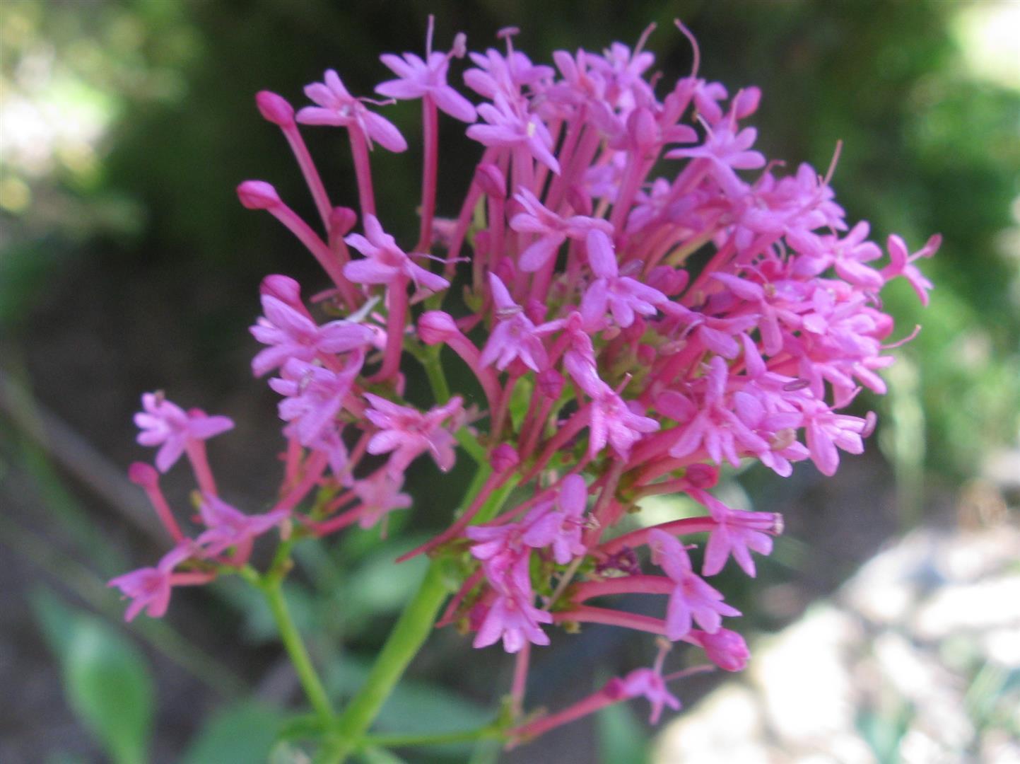 07-juillet-fleurs-2012-19-jpg