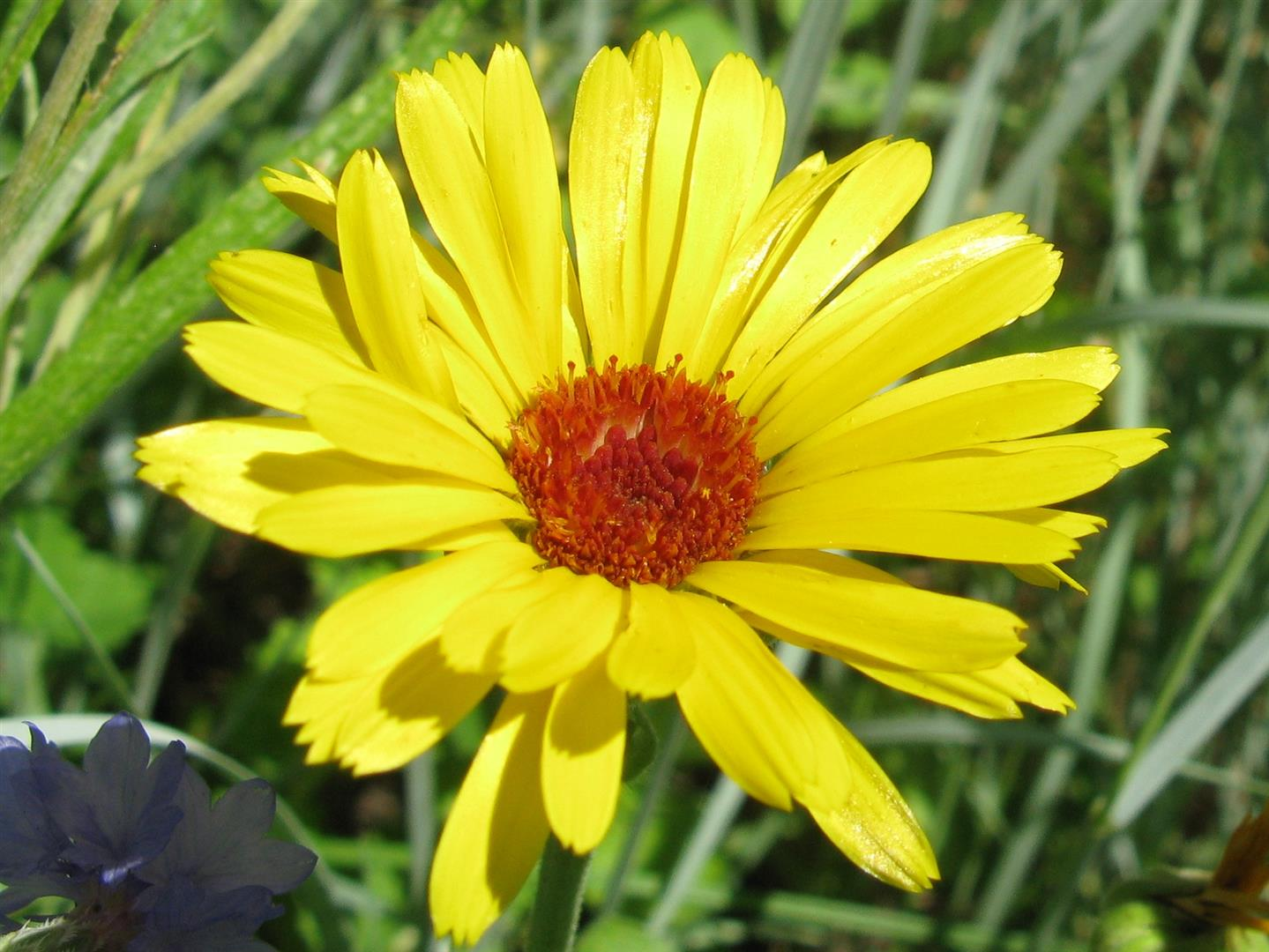 07-juillet-fleurs-2012-22-jpg