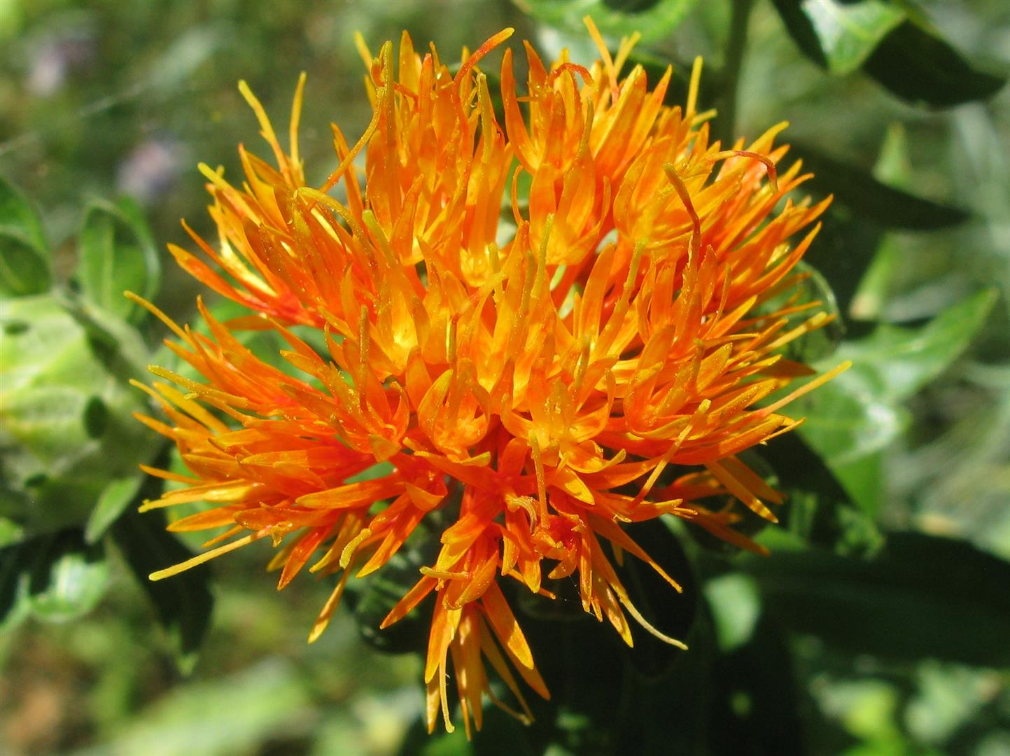07-juillet-fleurs-2012-23-jpg
