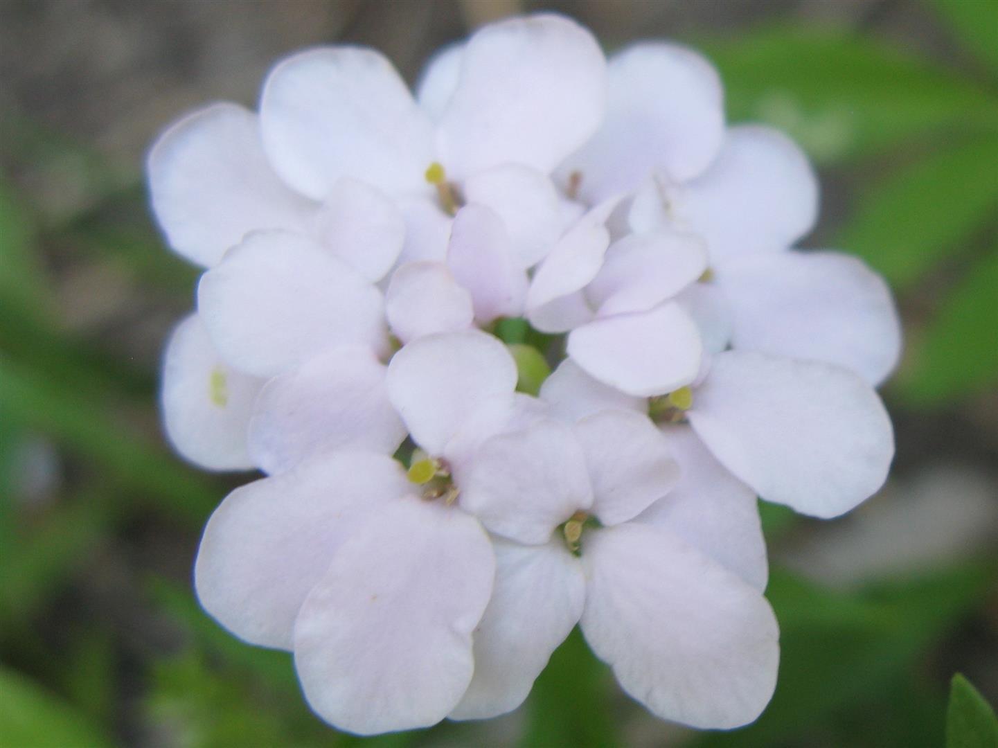 07-juillet-fleurs-2012-29-jpg