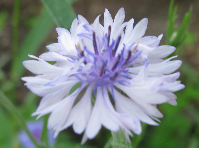 07-juillet-fleurs-2012-8-jpg