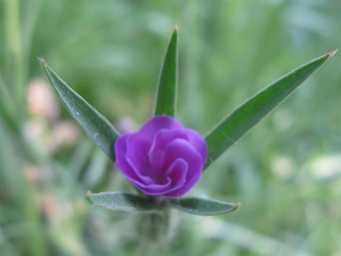 07-juillet-fleurs-2013-3-jpg