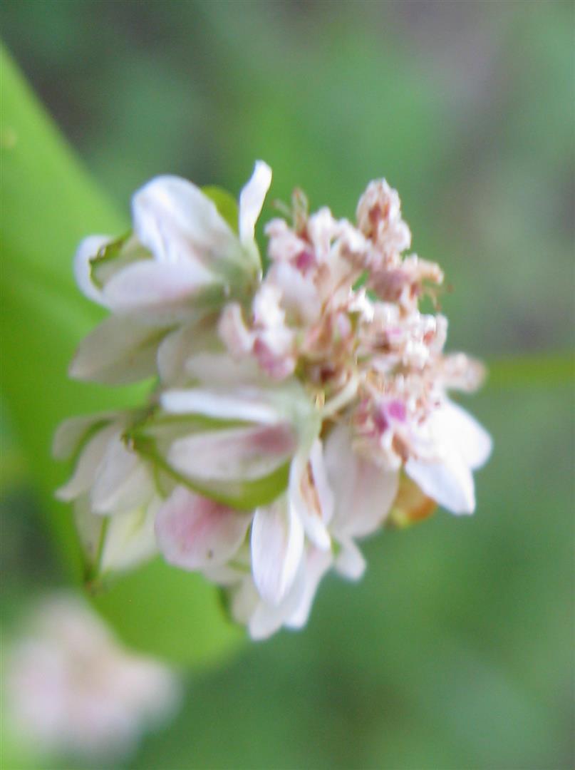 07-juillet-fleurs-2013-4-jpg