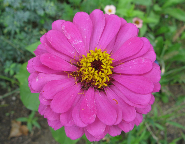 09-septembre-fleurs-2012-3-jpg
