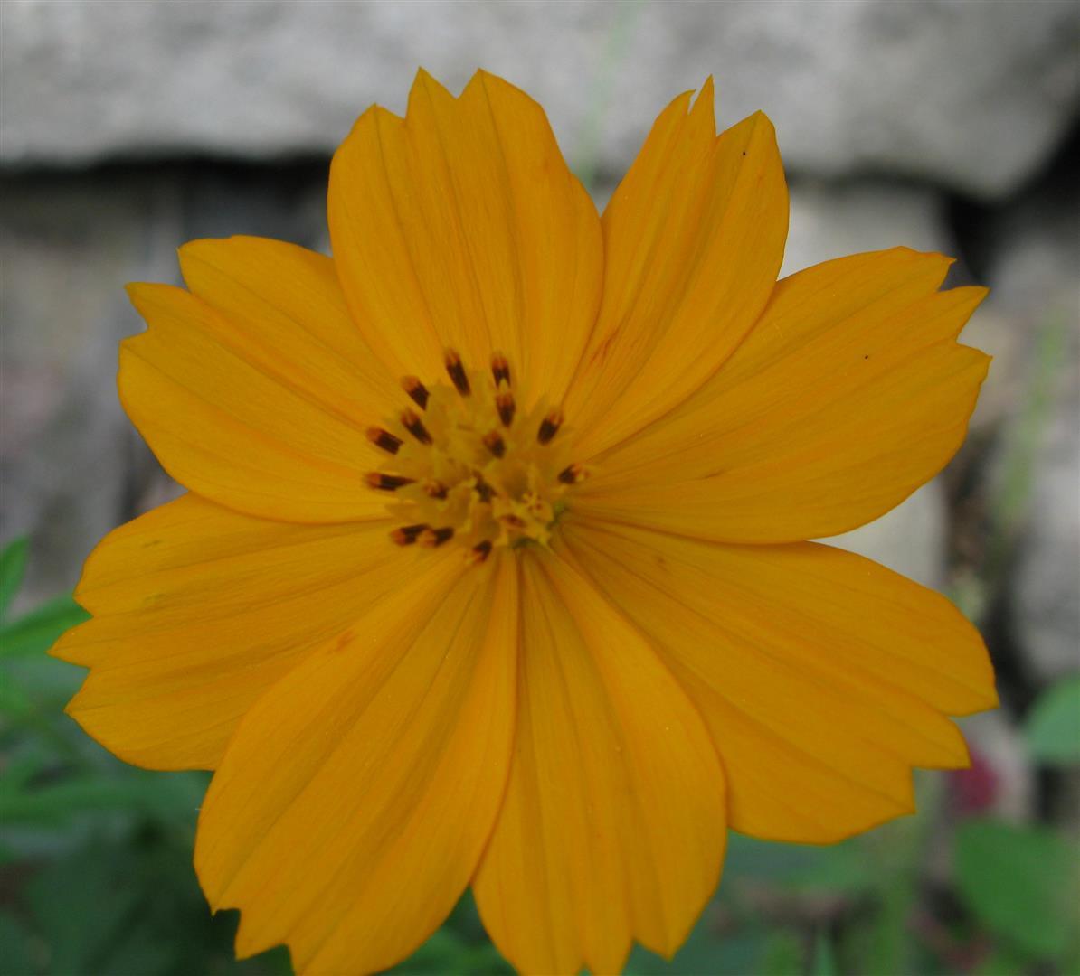 09-septembre-fleurs-2012-4-jpg