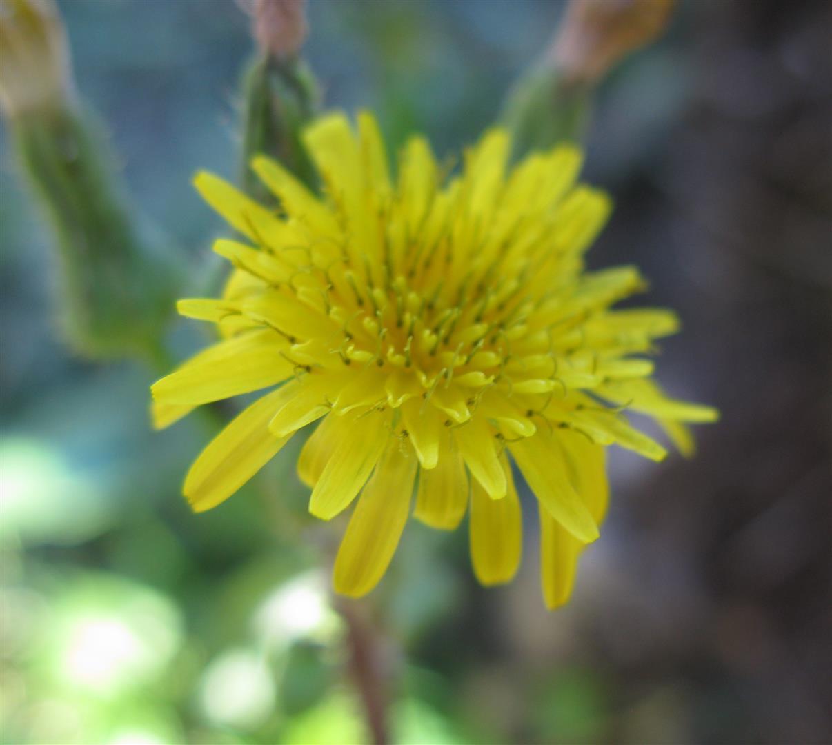 10-octobre-fleurs-2012-1-jpg