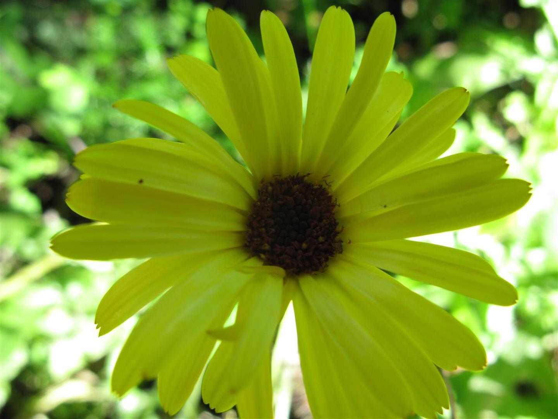 10-octobre-fleurs-2012-12-jpg