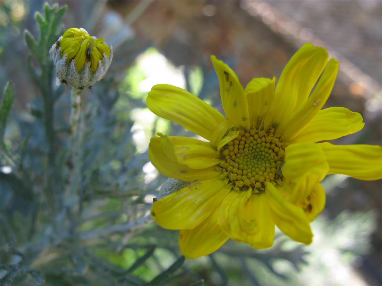 10-octobre-fleurs-2012-13-jpg