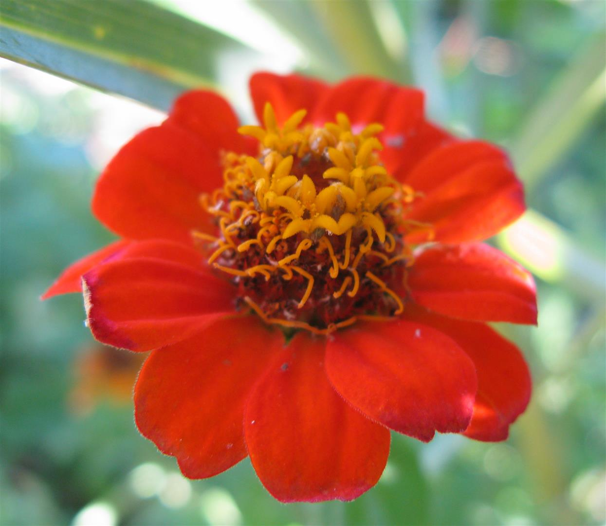 10-octobre-fleurs-2012-15-jpg
