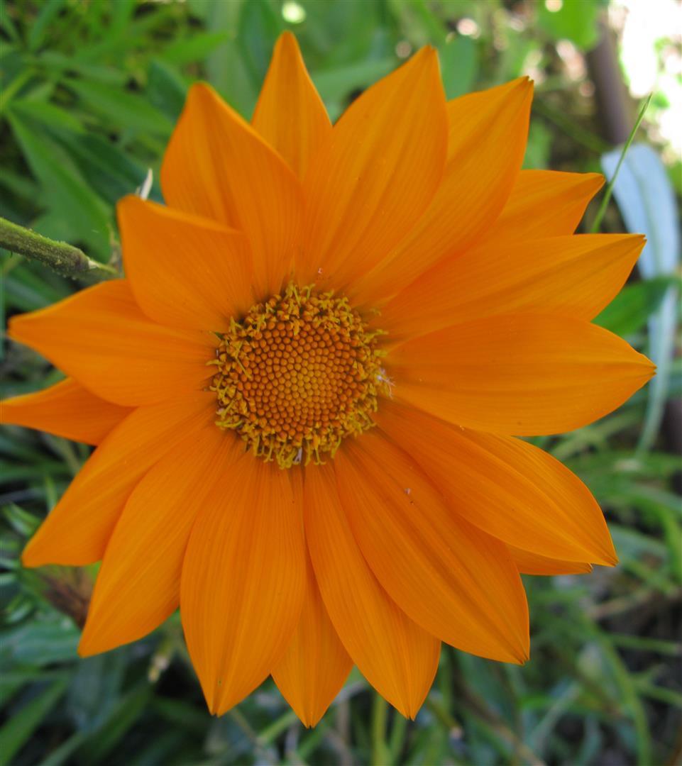10-octobre-fleurs-2012-16-jpg