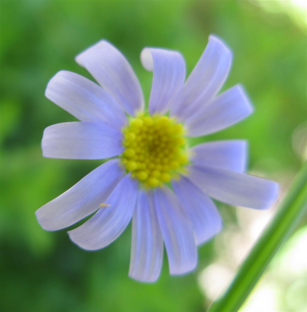 10-octobre-fleurs-2012-17-jpg