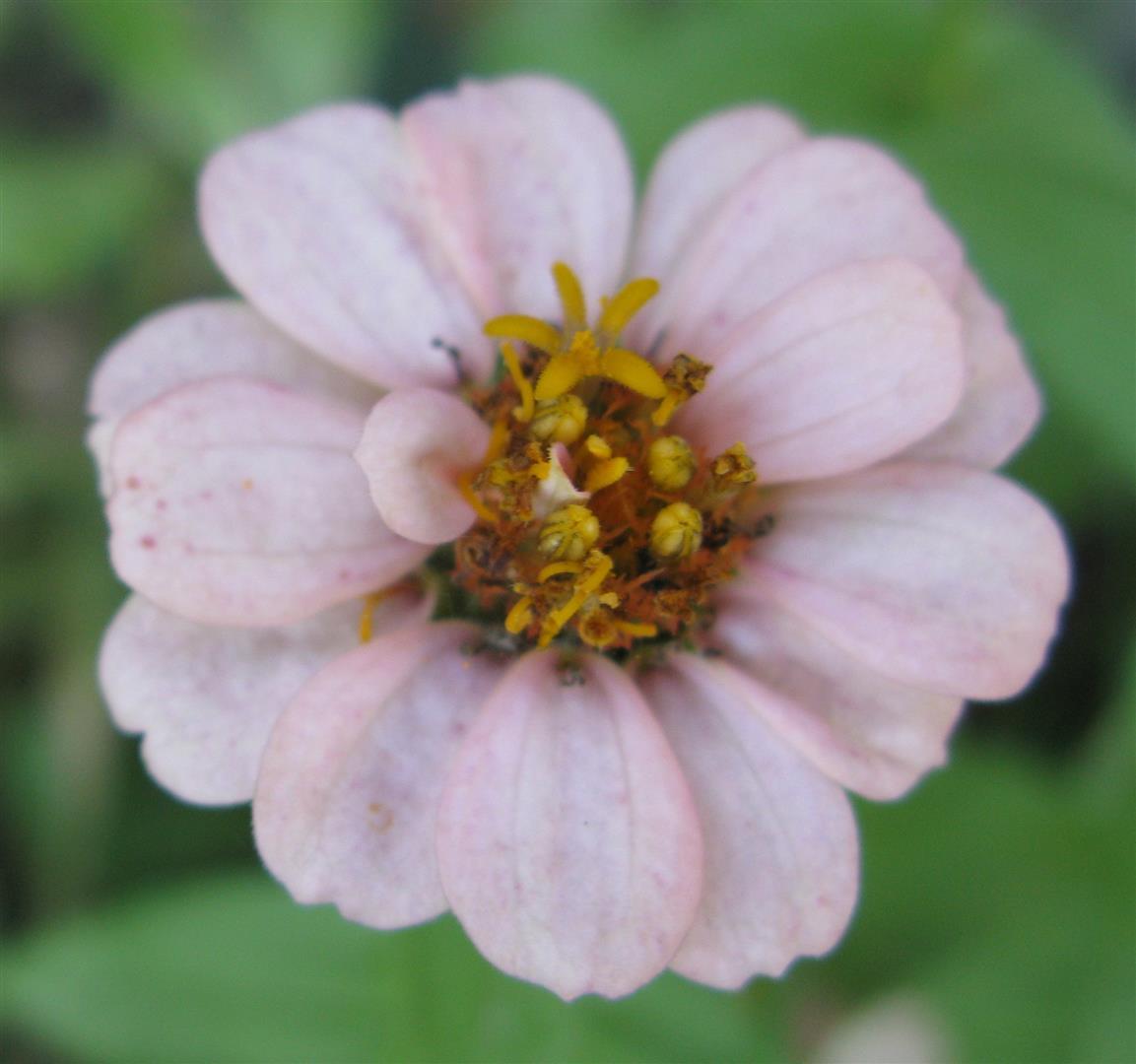 10-octobre-fleurs-2012-19-jpg