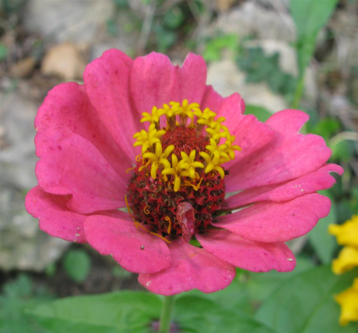 10-octobre-fleurs-2012-2-jpg