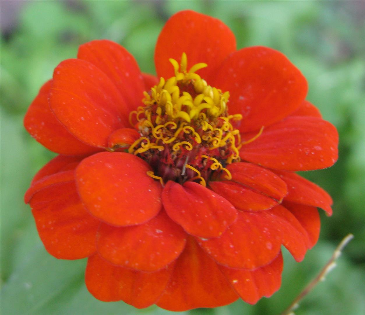 10-octobre-fleurs-2012-22-jpg