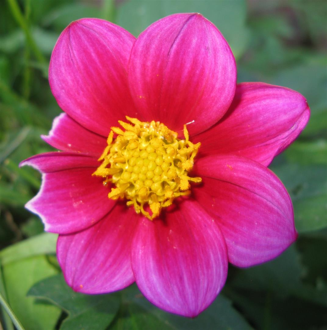 10-octobre-fleurs-2012-23-jpg