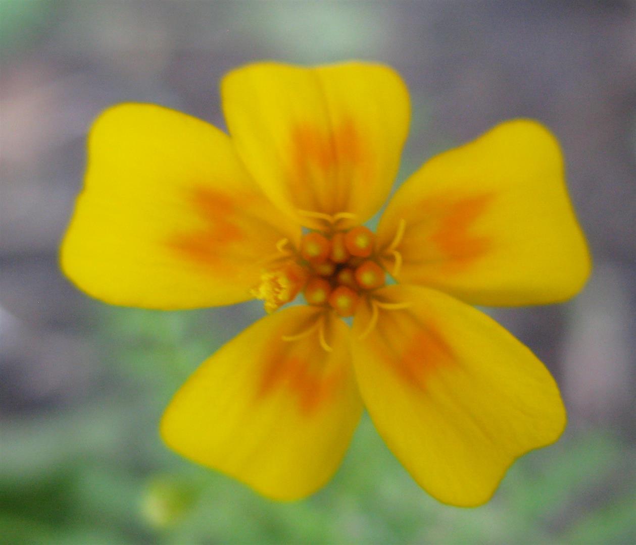 10-octobre-fleurs-2012-24-jpg