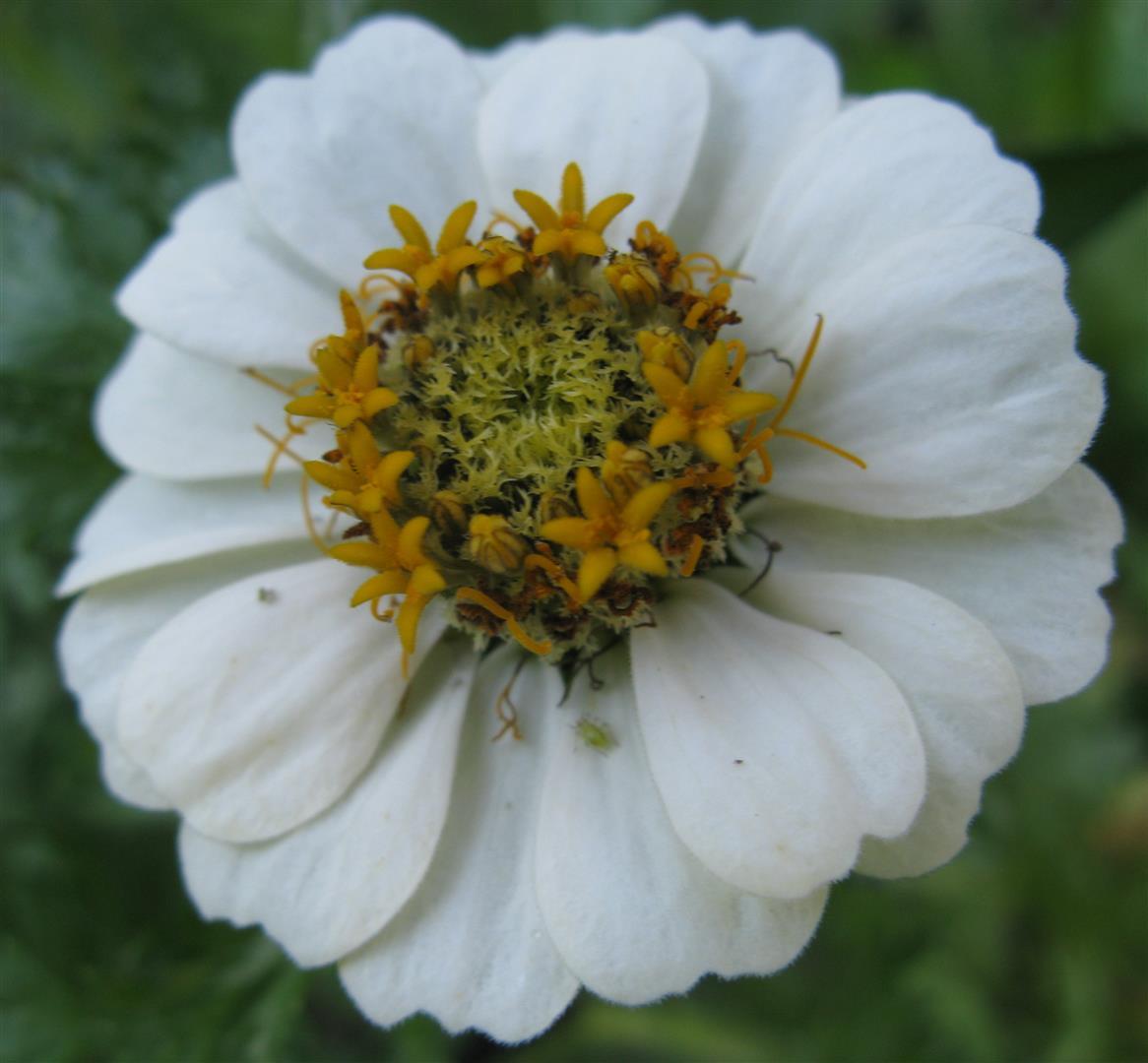 10-octobre-fleurs-2012-26-jpg
