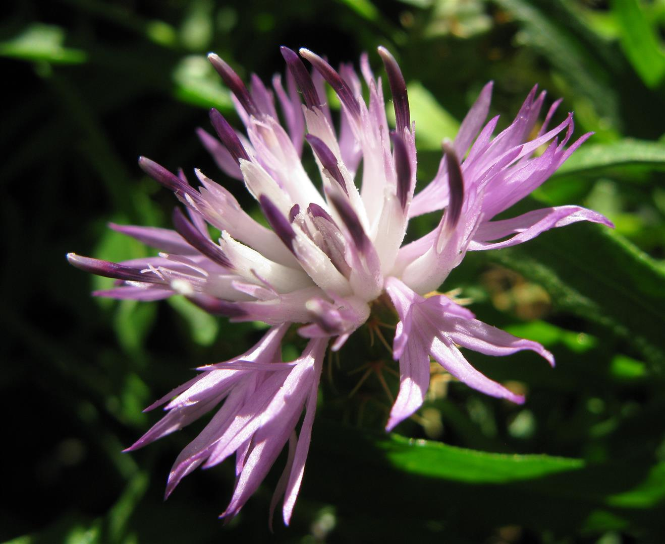 10-octobre-fleurs-2012-28-jpg