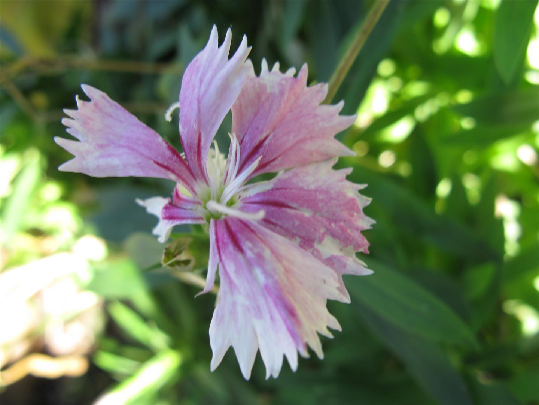 10-octobre-fleurs-2012-3-jpg