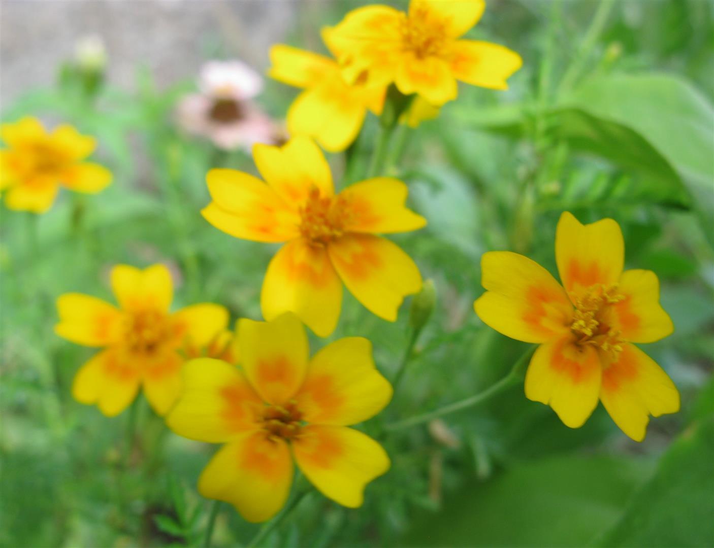 10-octobre-fleurs-2012-6-jpg