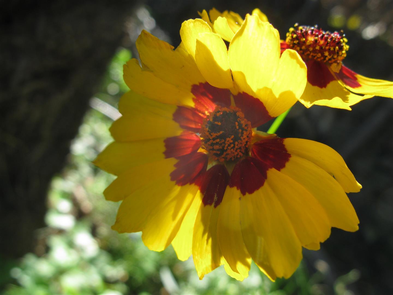 10-octobre-fleurs-2012-7-jpg