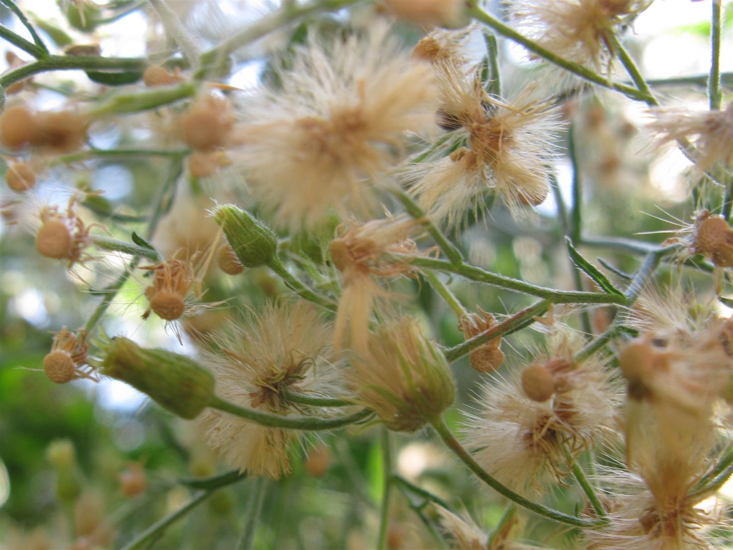 10-octobre-fleurs-2013-10-jpg