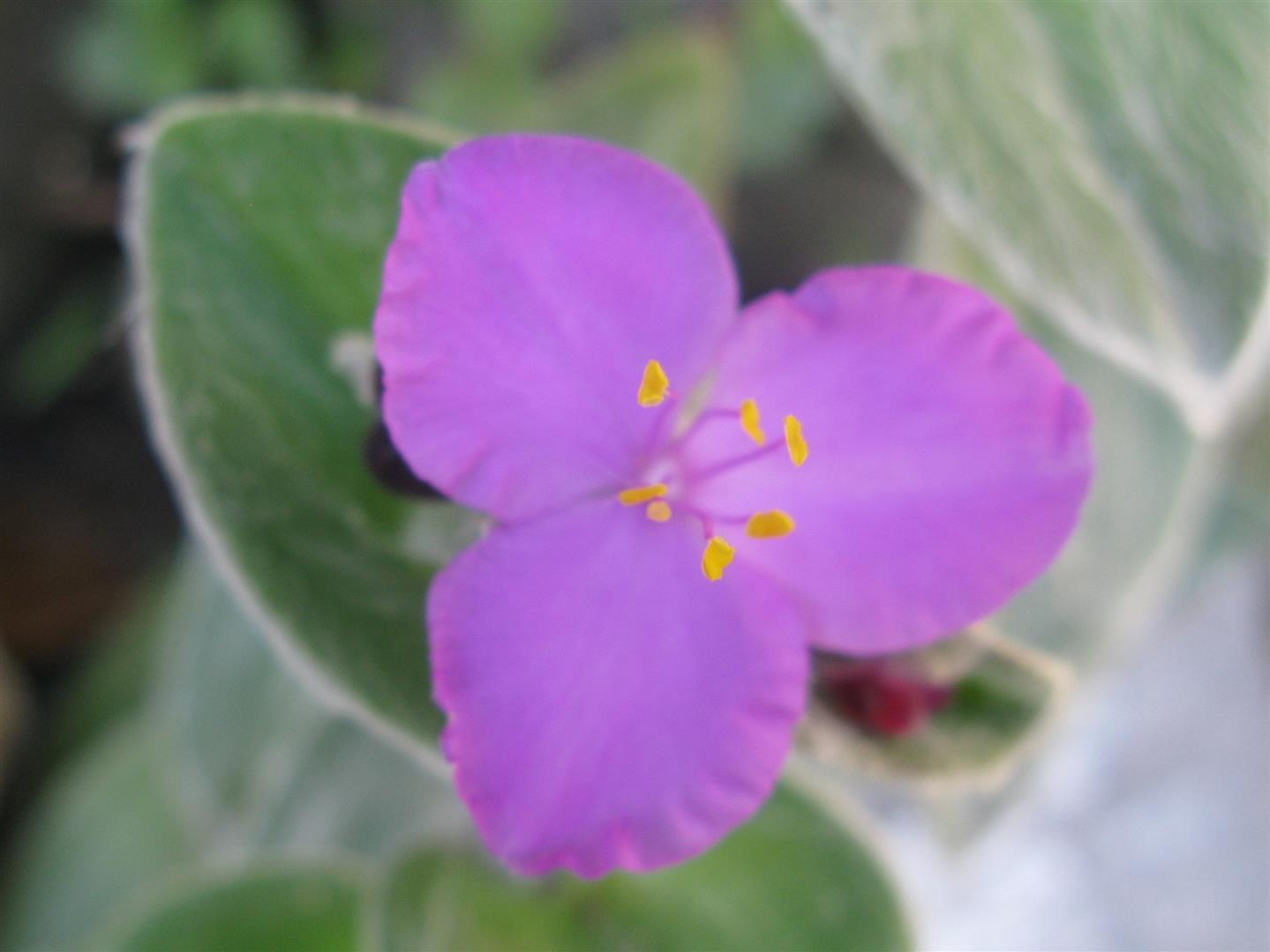 10-octobre-fleurs-2013-32-jpg