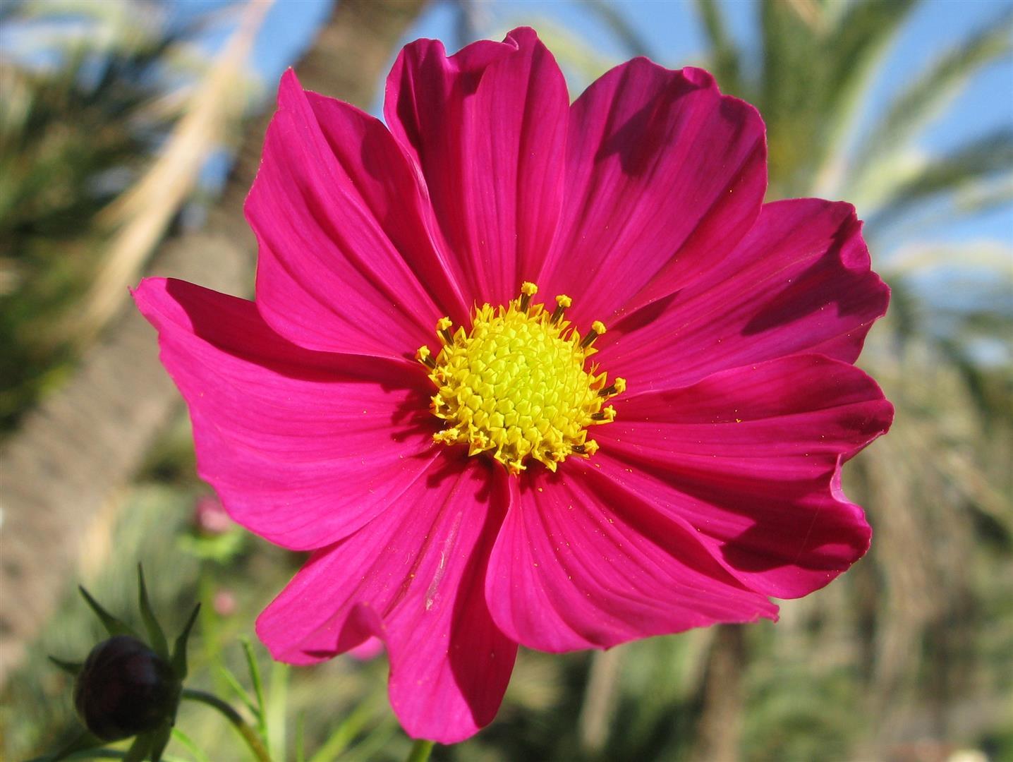 10-octobre-fleurs-2013-35-jpg