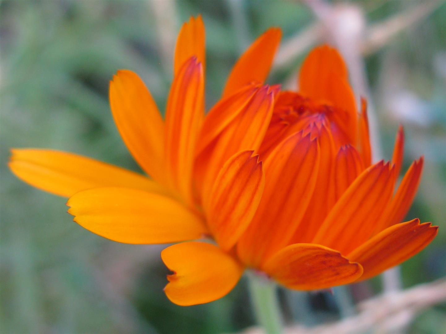 10-octobre-fleurs-2013-37-jpg