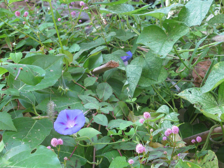 10-octobre-fleurs-2013-75-jpg