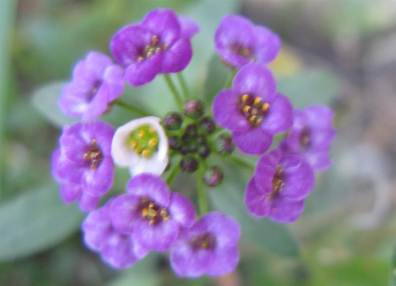11-novembre-fleurs-2012-18-jpg