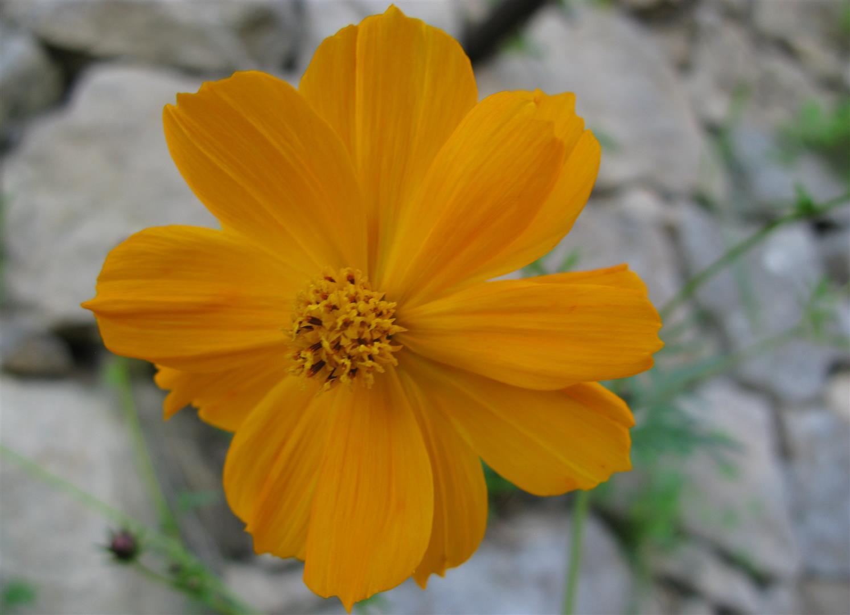 11-novembre-fleurs-2012-21-jpg