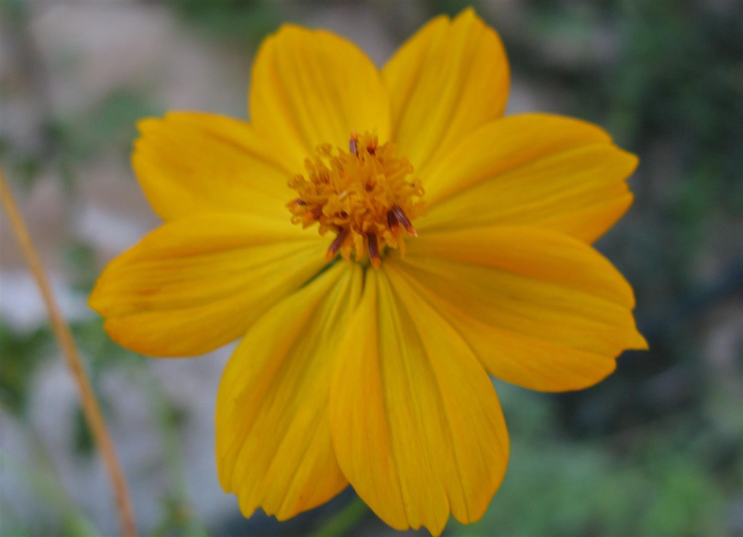 11-novembre-fleurs-2012-26-jpg