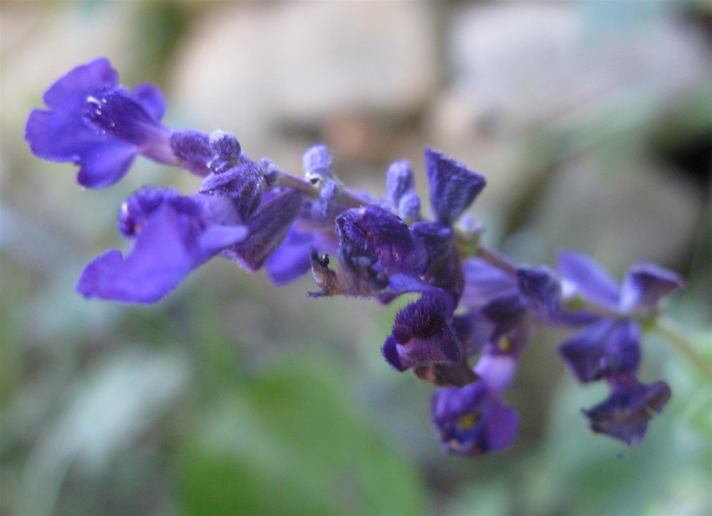 11-novembre-fleurs-2012-27-jpg