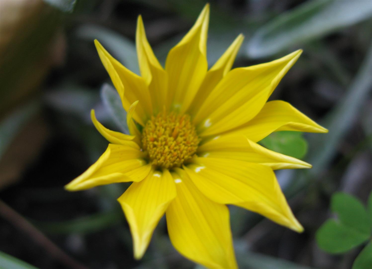 11-novembre-fleurs-2012-5-jpg