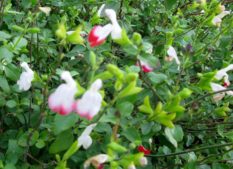 12-d%c3%a9cembre-fleurs-2012-11-jpg
